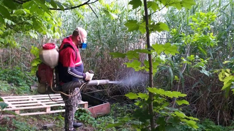 В Краснодаре проводится дезинсекция водных объектов