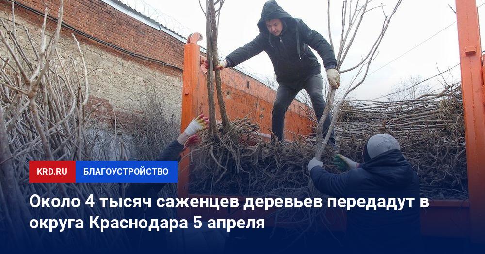 245995 69a0e44e Около 4 тыс. саженцев деревьев передадут в округа Краснодара 5 апреля